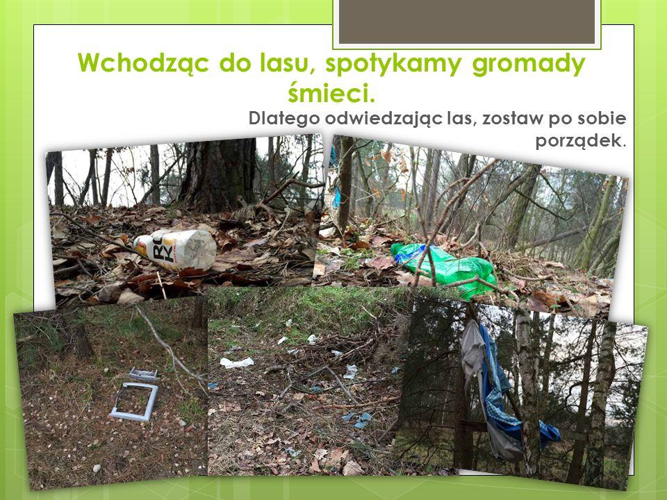 Wchodząc do lasu, spotykamy gromady śmieci.