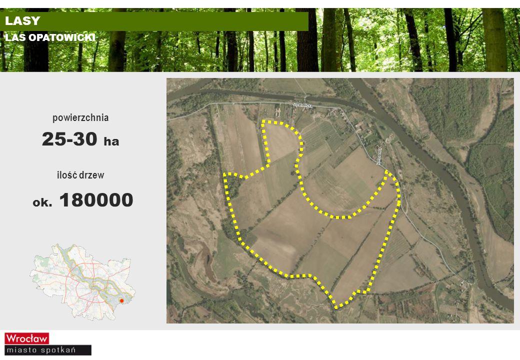 LASY LAS OPATOWICKI powierzchnia 25-30 ha ilość drzew ok. 180000