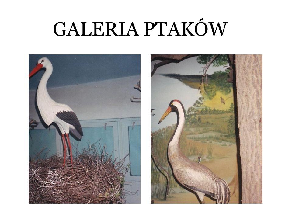 GALERIA PTAKÓW