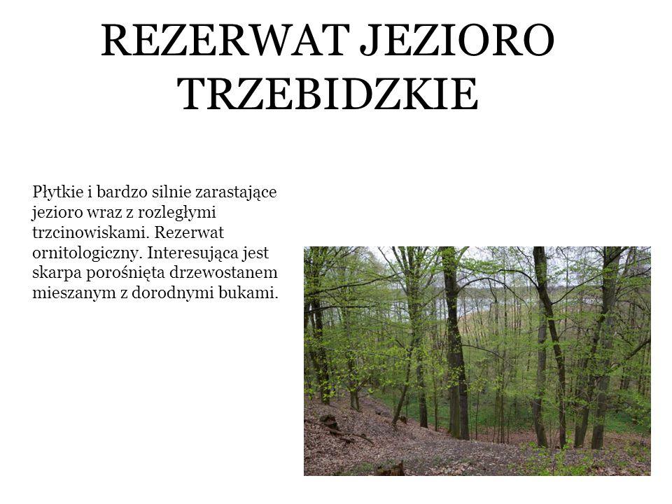 REZERWAT JEZIORO TRZEBIDZKIE