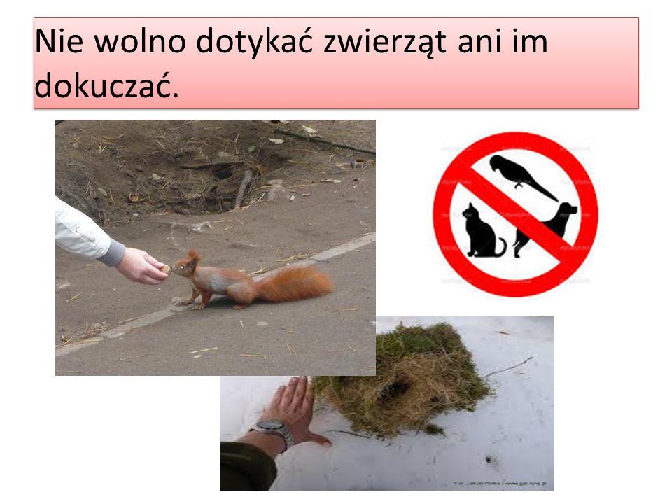Nie wolno dotykać zwierząt ani im dokuczać.