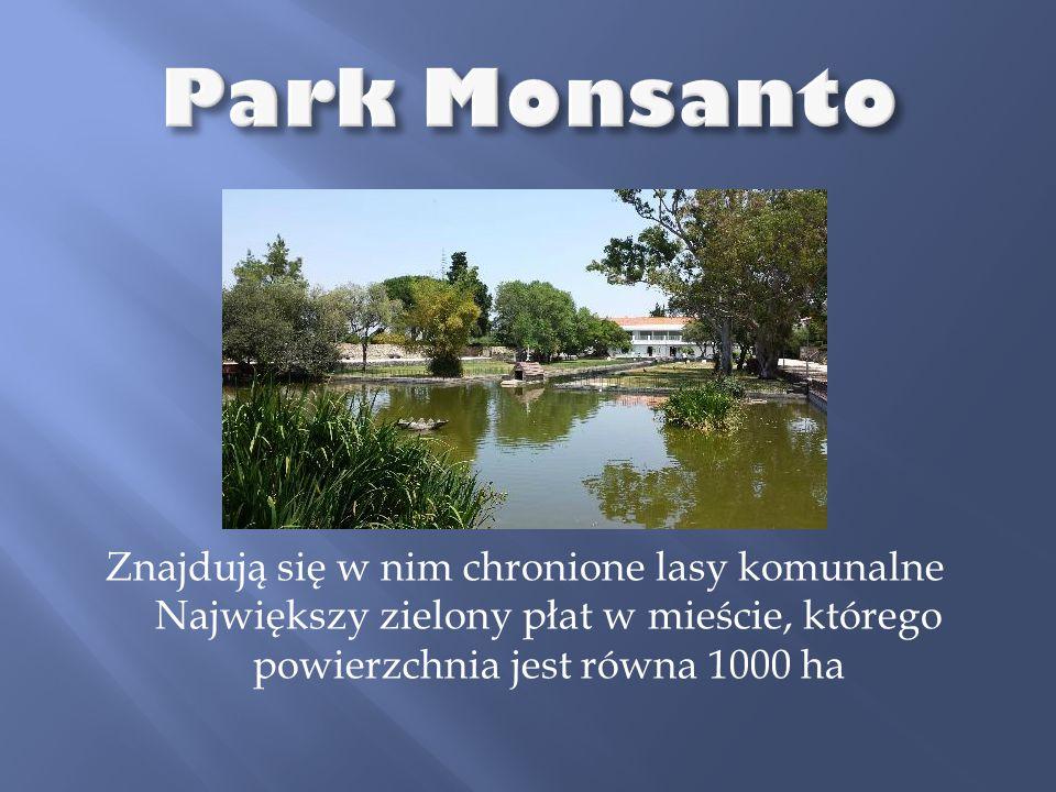 Park Monsanto Znajdują się w nim chronione lasy komunalne Największy zielony płat w mieście, którego powierzchnia jest równa 1000 ha.