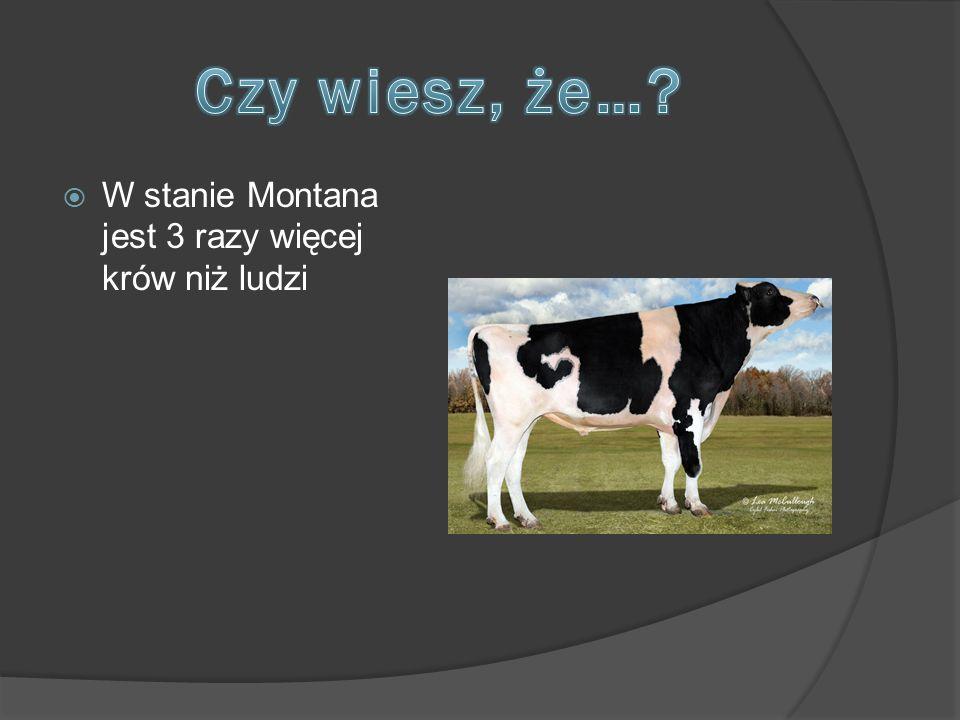 Czy wiesz, że… W stanie Montana jest 3 razy więcej krów niż ludzi