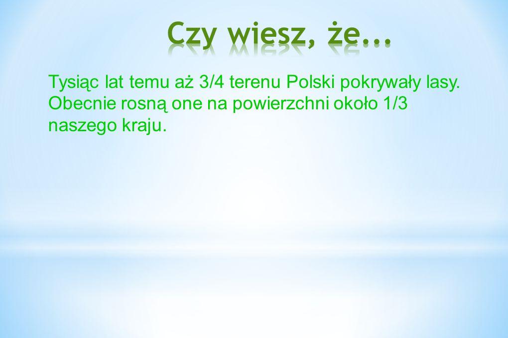 Czy wiesz, że... Tysiąc lat temu aż 3/4 terenu Polski pokrywały lasy.