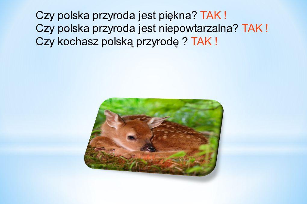 Czy polska przyroda jest piękna. TAK