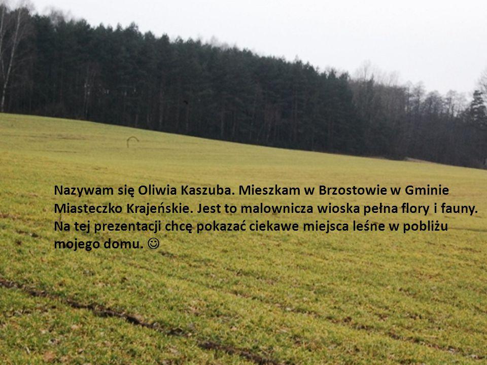 Nazywam się Oliwia Kaszuba
