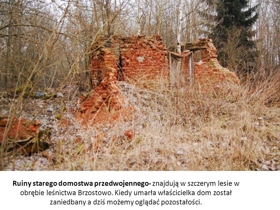 Ruiny starego domostwa przedwojennego- znajdują w szczerym lesie w obrębie leśnictwa Brzostowo.