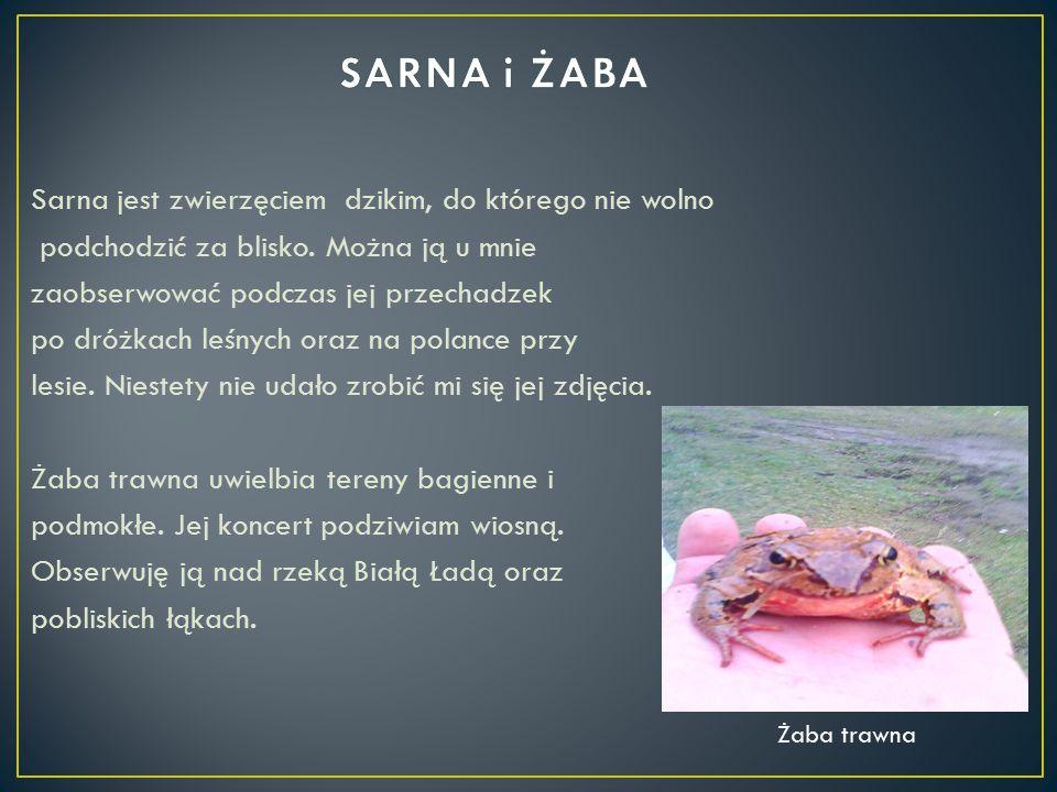 SARNA i ŻABA