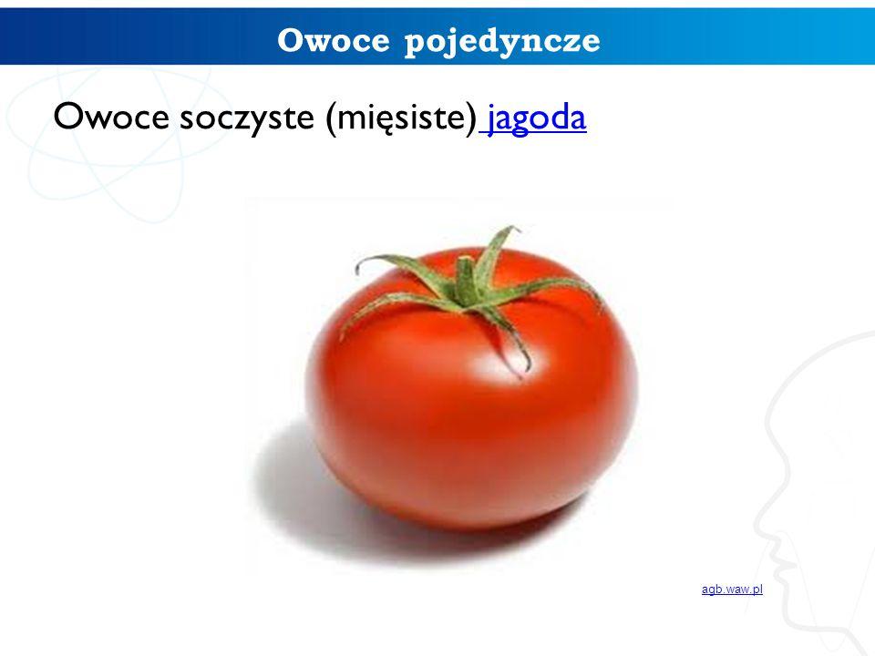 Owoce soczyste (mięsiste) jagoda