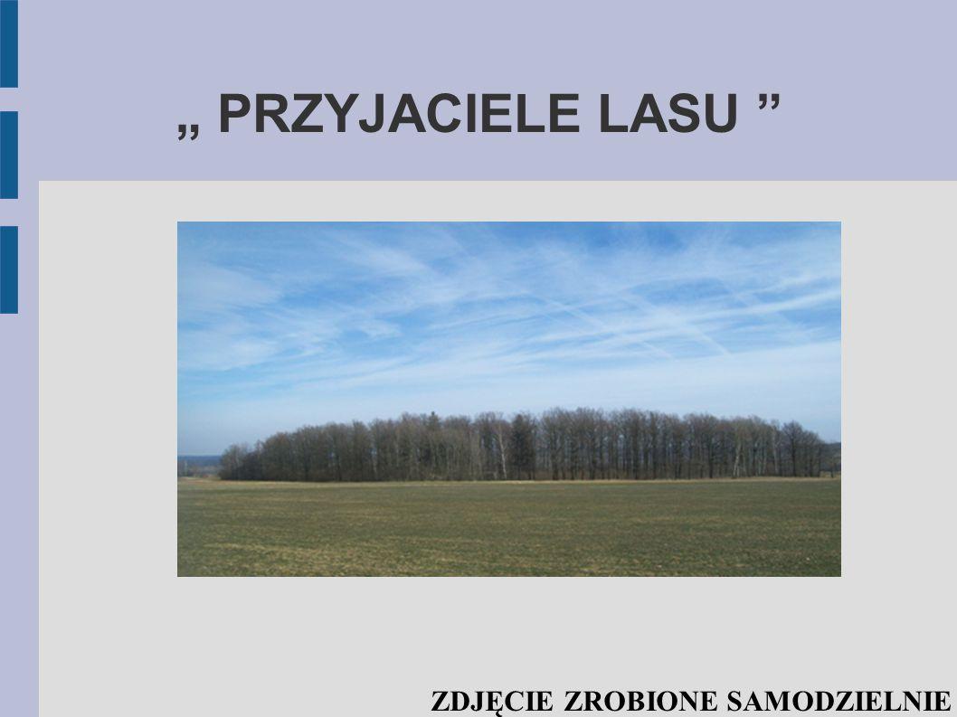 """"""" PRZYJACIELE LASU ZDJĘCIE ZROBIONE SAMODZIELNIE"""