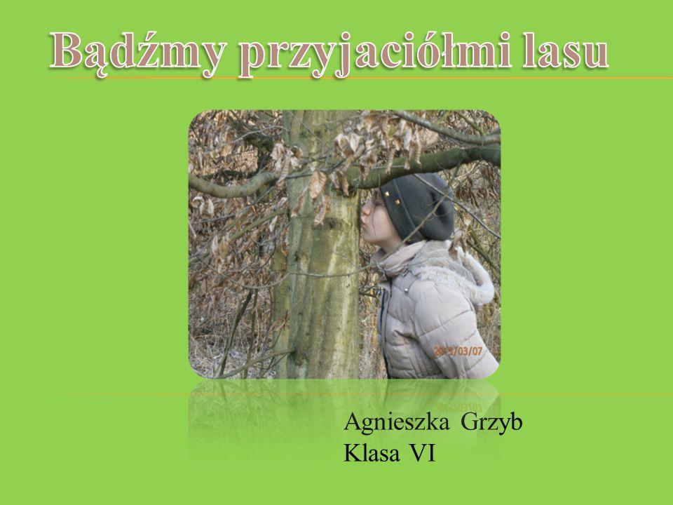 Agnieszka Grzyb Klasa VI