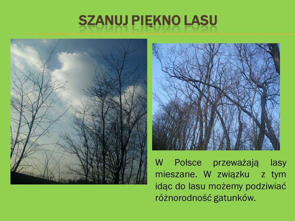 W Polsce przeważają lasy mieszane