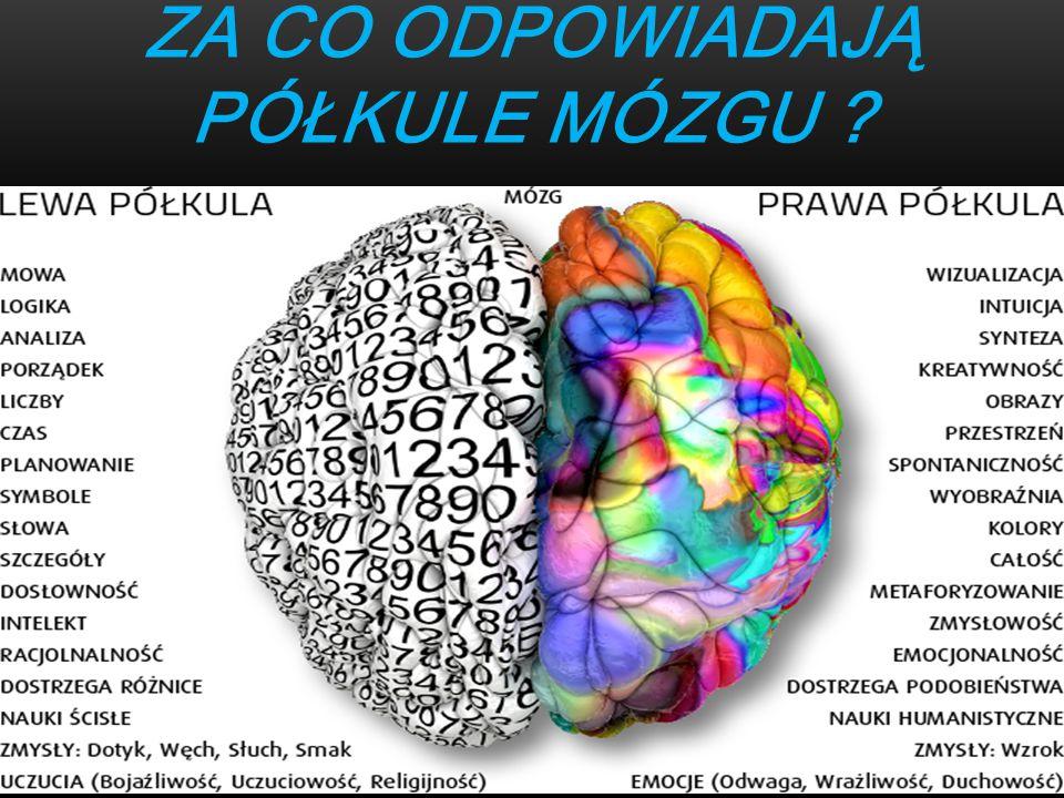 Za co odpowiadają półkule Mózgu