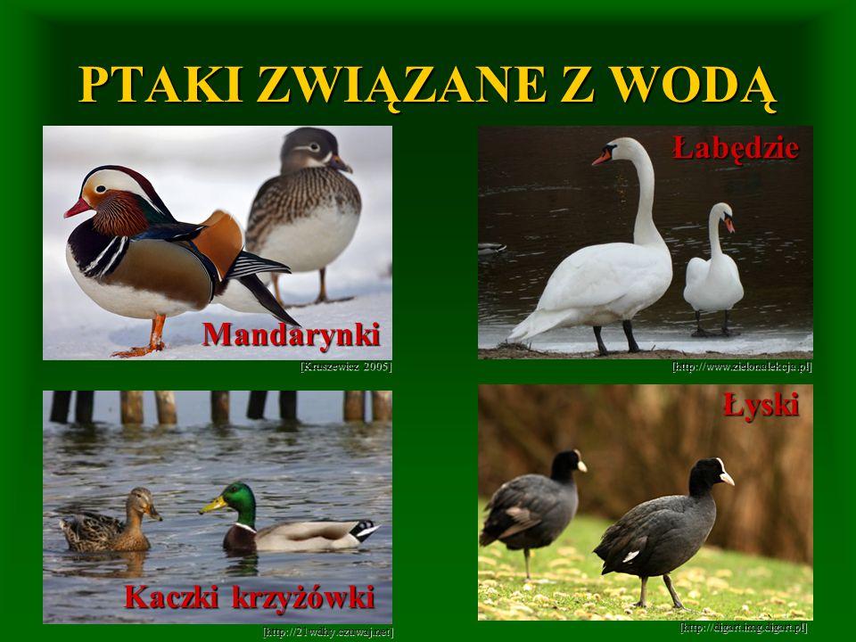 PTAKI ZWIĄZANE Z WODĄ Łabędzie Mandarynki Łyski Kaczki krzyżówki