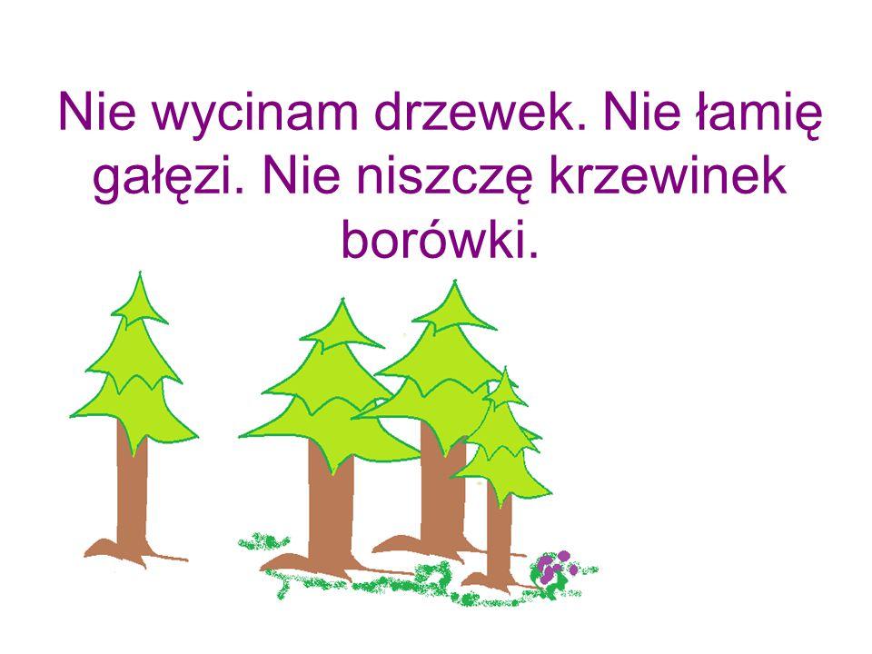 Nie wycinam drzewek. Nie łamię gałęzi. Nie niszczę krzewinek borówki.