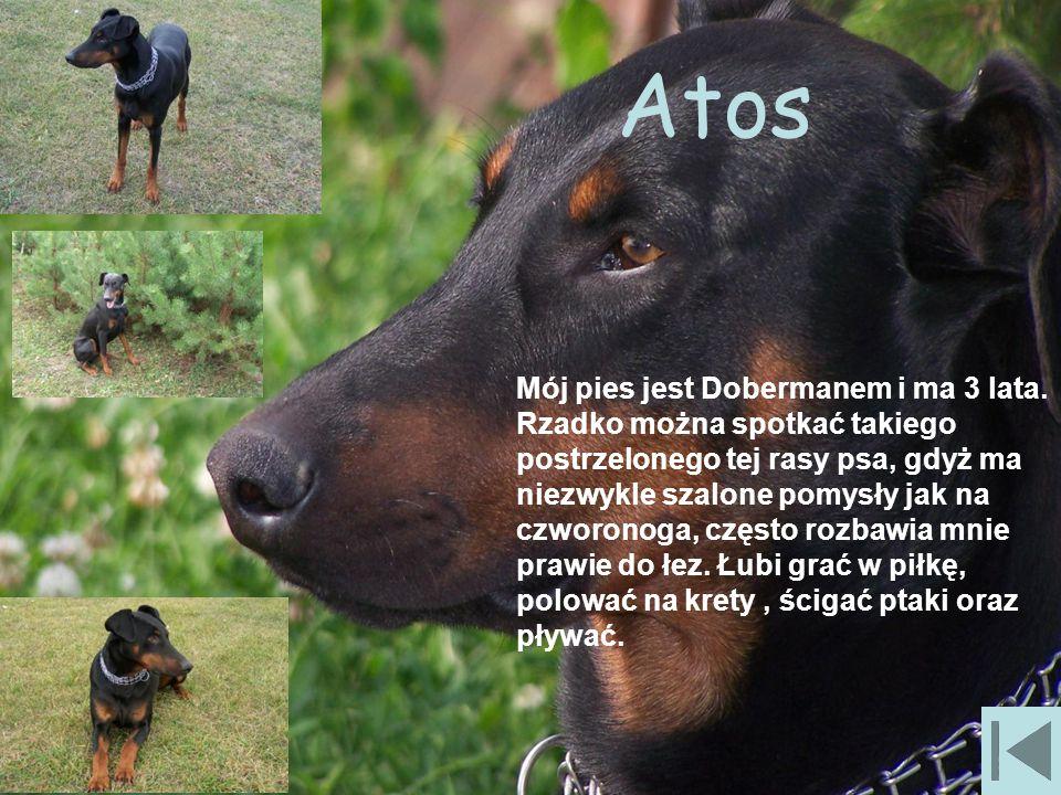 Atos Mój pies jest Dobermanem i ma 3 lata.
