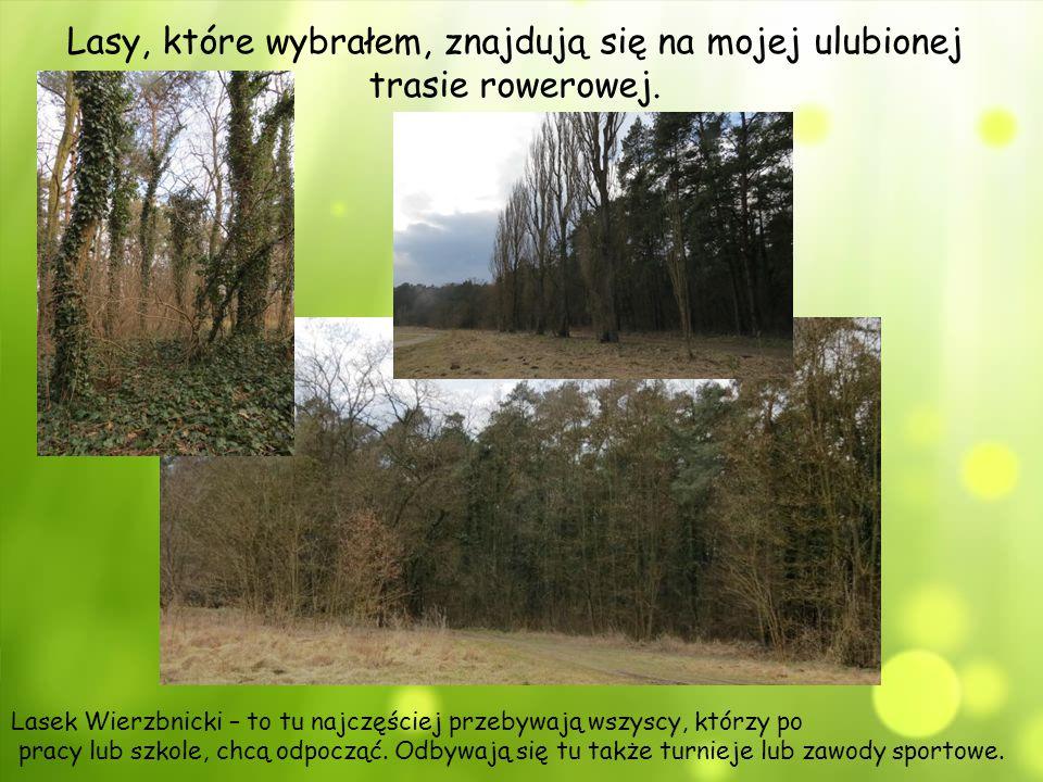 Lasy, które wybrałem, znajdują się na mojej ulubionej trasie rowerowej.