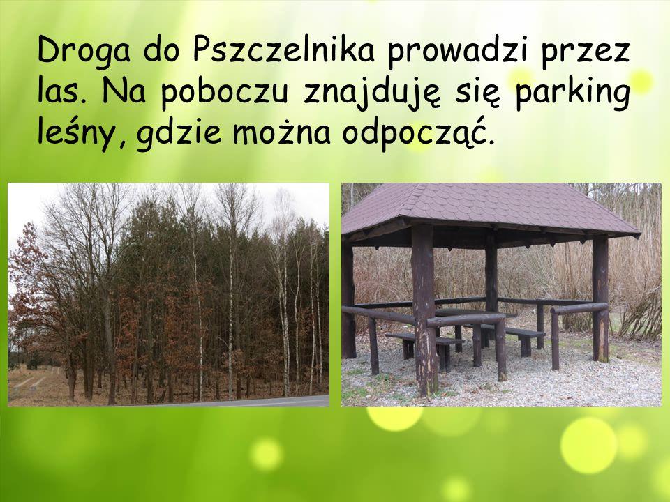 Droga do Pszczelnika prowadzi przez las
