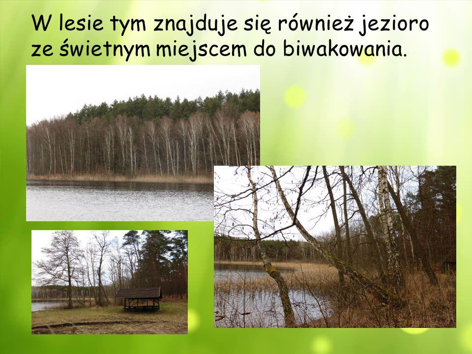 W lesie tym znajduje się również jezioro ze świetnym miejscem do biwakowania.