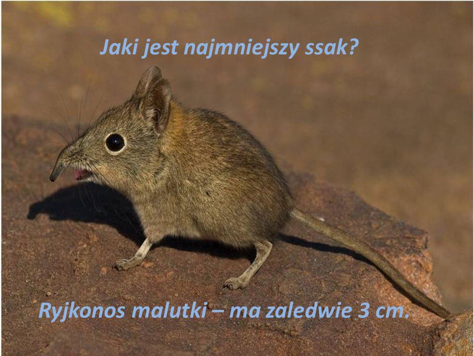 Jaki jest najmniejszy ssak