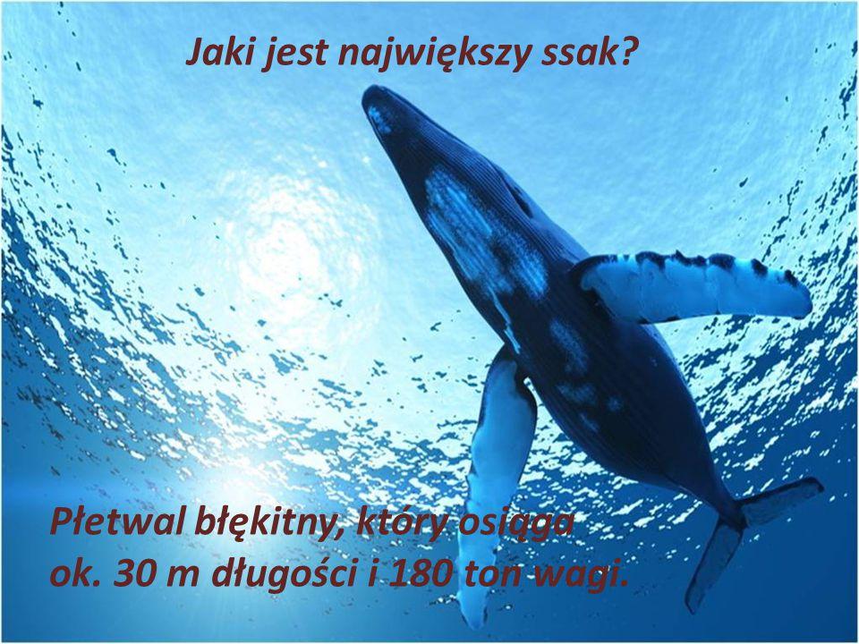 Jaki jest największy ssak