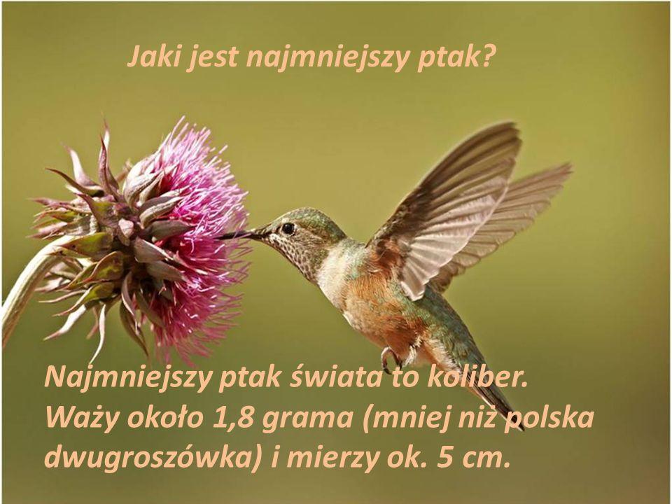 Jaki jest najmniejszy ptak