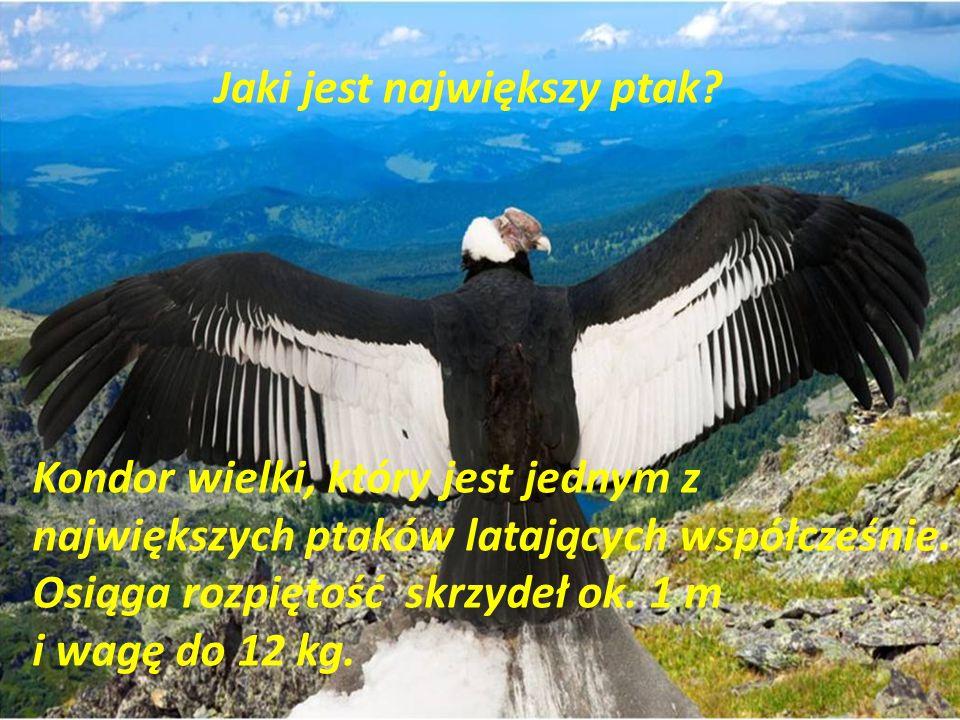 Jaki jest największy ptak