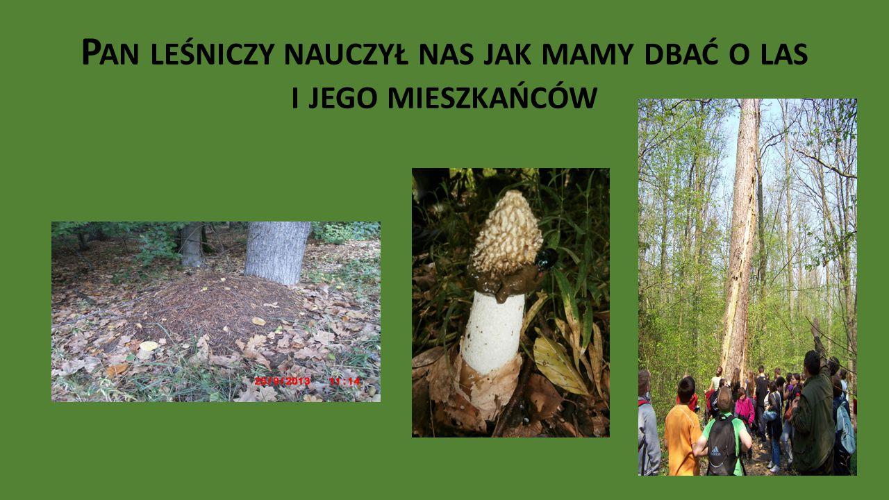 Pan leśniczy nauczył nas jak mamy dbać o las i jego mieszkańców