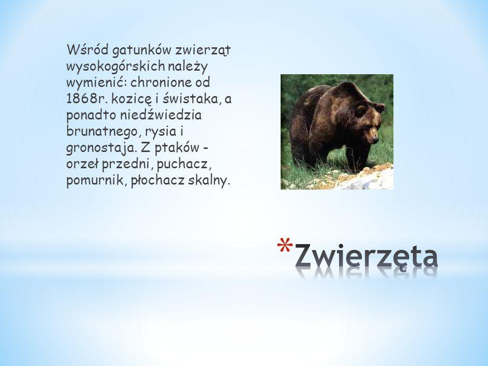 Wśród gatunków zwierząt wysokogórskich należy wymienić: chronione od 1868r. kozicę i świstaka, a ponadto niedźwiedzia brunatnego, rysia i gronostaja. Z ptaków - orzeł przedni, puchacz, pomurnik, płochacz skalny.