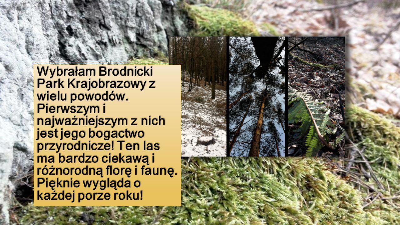 Wybrałam Brodnicki Park Krajobrazowy z wielu powodów