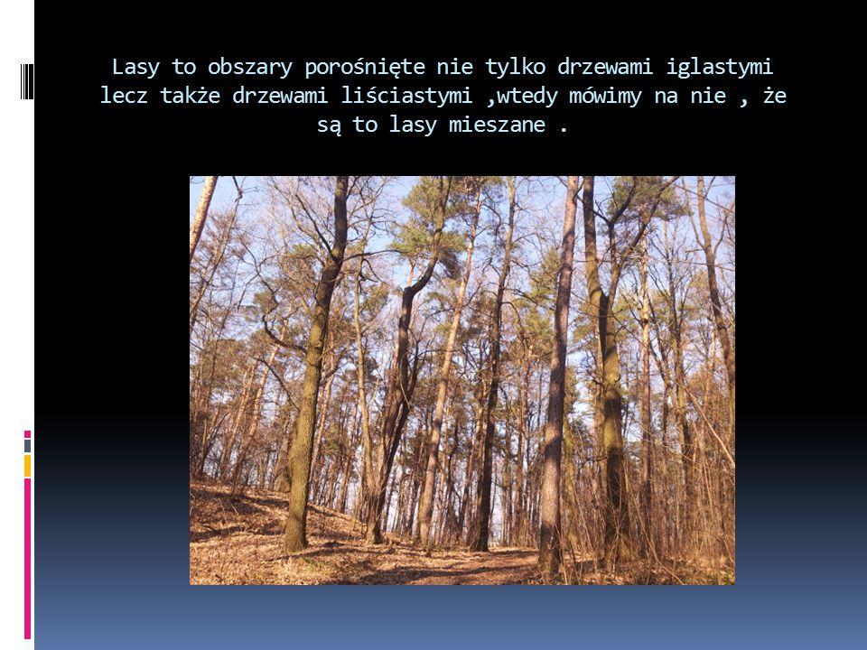 Lasy to obszary porośnięte nie tylko drzewami iglastymi lecz także drzewami liściastymi ,wtedy mówimy na nie , że są to lasy mieszane .