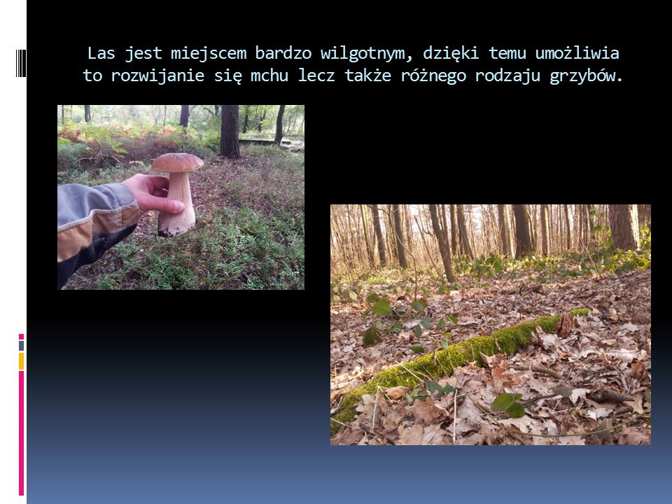 Las jest miejscem bardzo wilgotnym, dzięki temu umożliwia to rozwijanie się mchu lecz także różnego rodzaju grzybów.