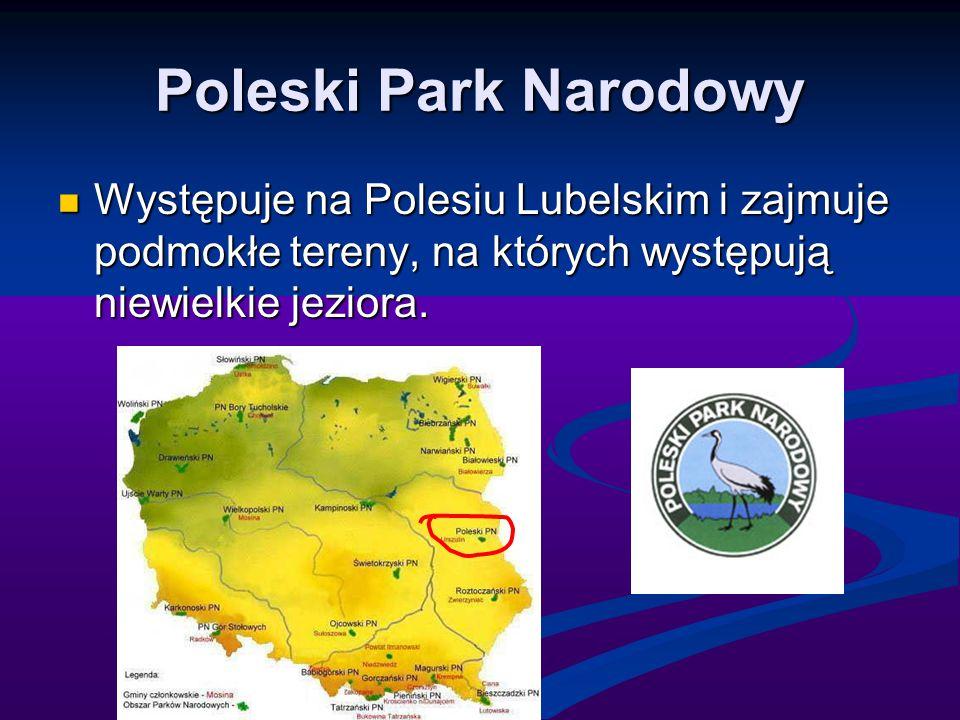 Poleski Park Narodowy Występuje na Polesiu Lubelskim i zajmuje podmokłe tereny, na których występują niewielkie jeziora.