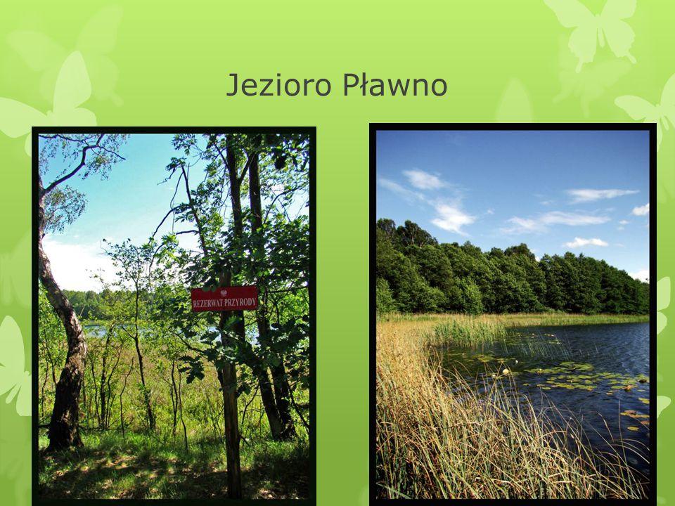 Jezioro Pławno