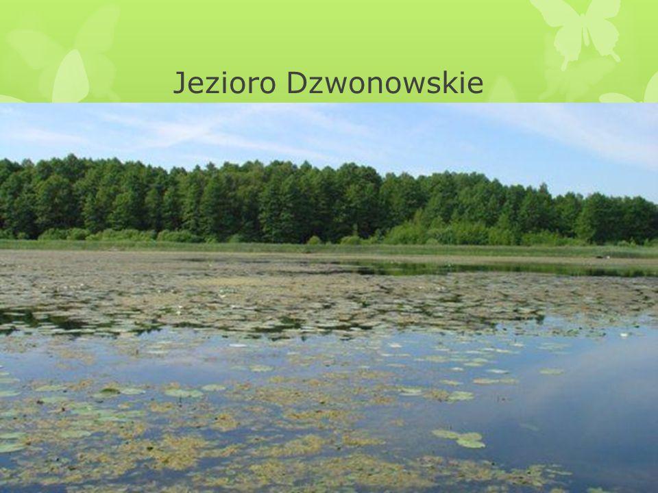 Jezioro Dzwonowskie