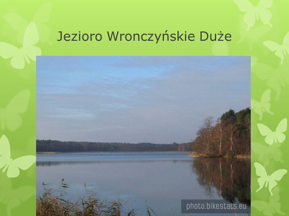 Jezioro Wronczyńskie Duże