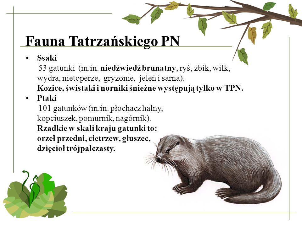 Fauna Tatrzańskiego PN