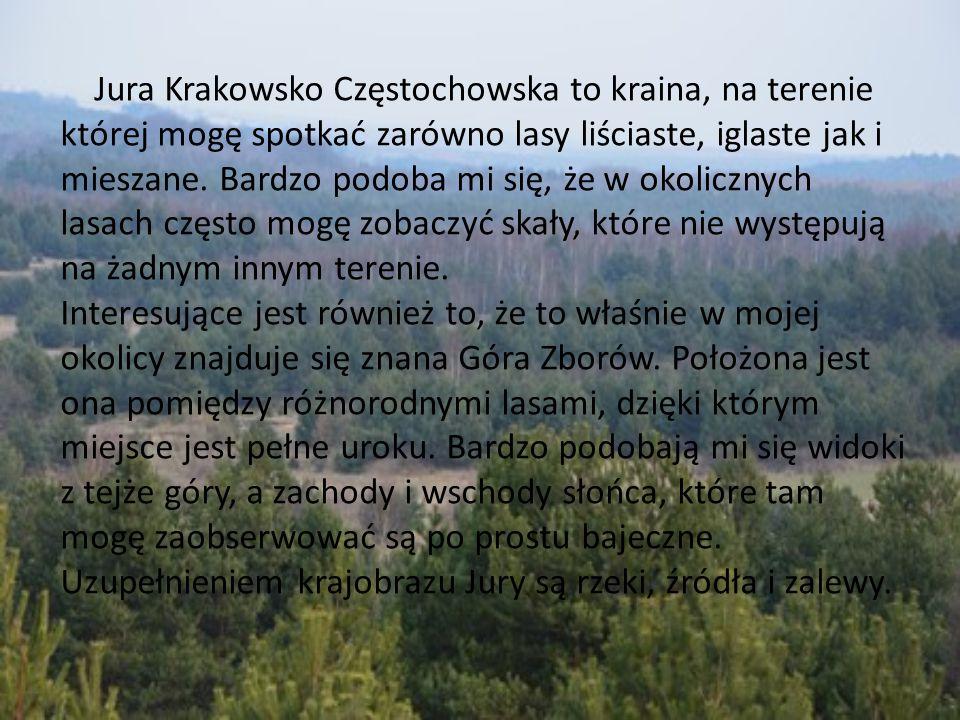 Jura Krakowsko Częstochowska to kraina, na terenie której mogę spotkać zarówno lasy liściaste, iglaste jak i mieszane. Bardzo podoba mi się, że w okolicznych lasach często mogę zobaczyć skały, które nie występują na żadnym innym terenie. Interesujące jest również to, że to właśnie w mojej okolicy znajduje się znana Góra Zborów. Położona jest ona pomiędzy różnorodnymi lasami, dzięki którym miejsce jest pełne uroku. Bardzo podobają mi się widoki z tejże góry, a zachody i wschody słońca, które tam mogę zaobserwować są po prostu bajeczne. Uzupełnieniem krajobrazu Jury są rzeki, źródła i zalewy.