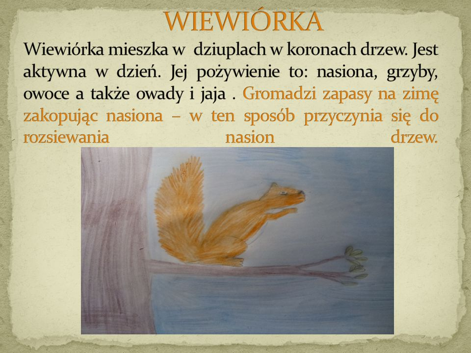WIEWIÓRKA Wiewiórka mieszka w dziuplach w koronach drzew