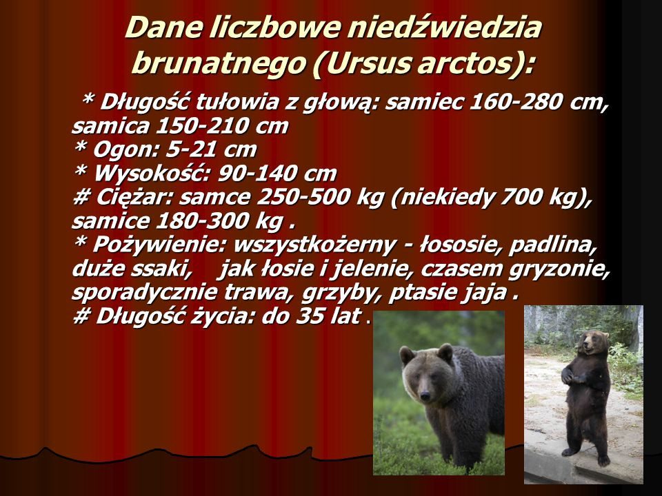 Dane liczbowe niedźwiedzia brunatnego (Ursus arctos):
