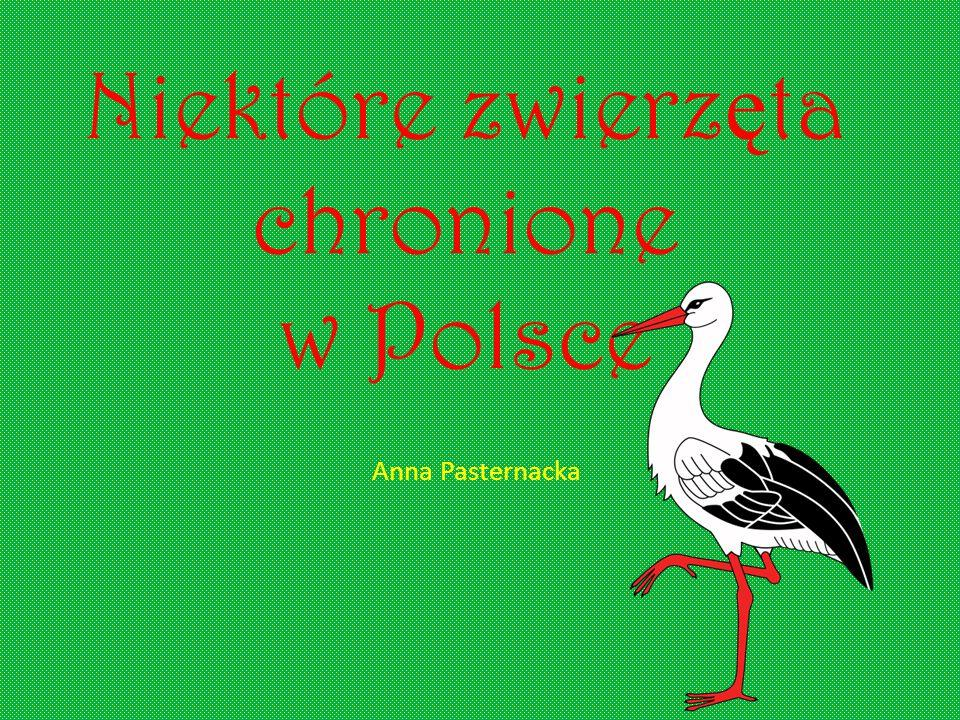 Niektóre zwierzęta chronione w Polsce