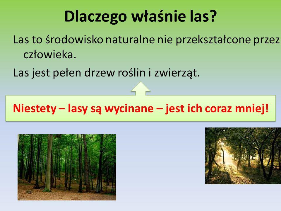 Dlaczego właśnie las