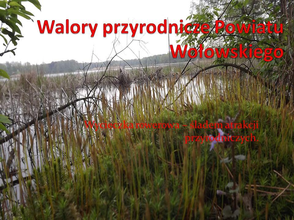 Walory przyrodnicze Powiatu Wołowskiego