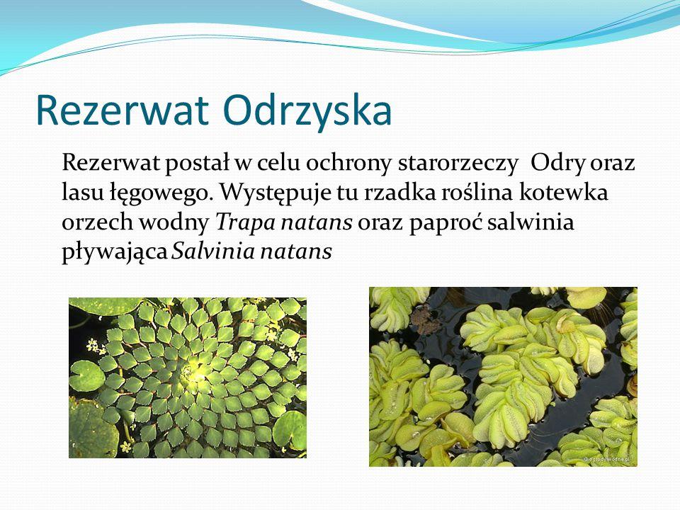 Rezerwat Odrzyska