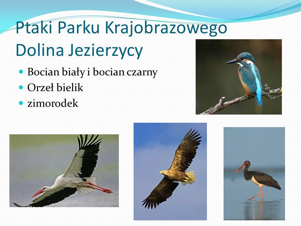 Ptaki Parku Krajobrazowego Dolina Jezierzycy