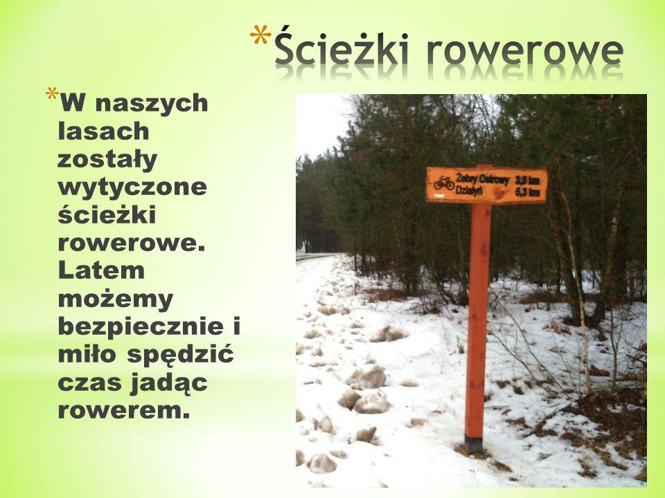 Ścieżki rowerowe W naszych lasach zostały wytyczone ścieżki rowerowe.
