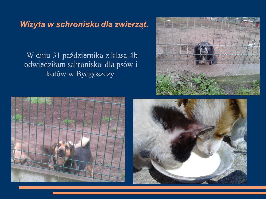 Wizyta w schronisku dla zwierząt.