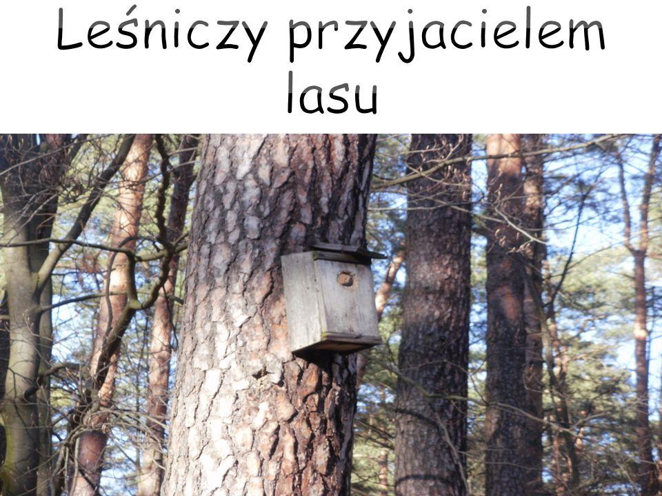 Leśniczy przyjacielem lasu