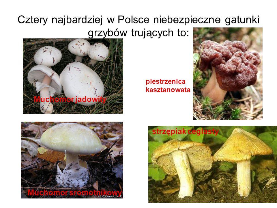 Cztery najbardziej w Polsce niebezpieczne gatunki grzybów trujących to: