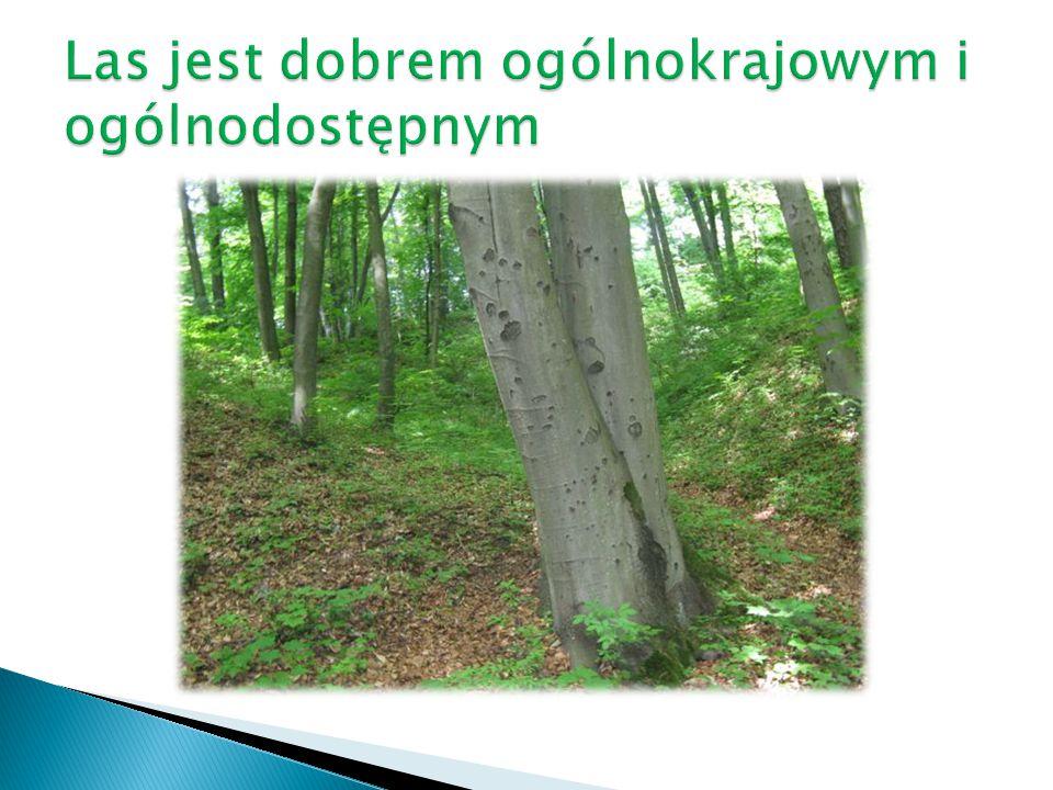 Las jest dobrem ogólnokrajowym i ogólnodostępnym